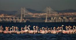 Tagus Estuary Nature Reserve, Reserva Natural do Estuário do Tejo